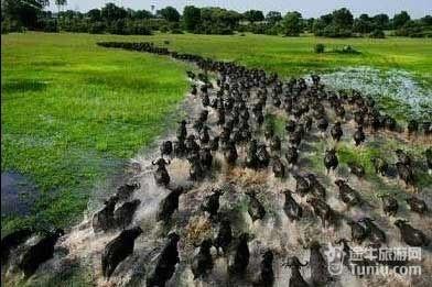 肯尼亚动物大迁徙-近距离观看95种动物