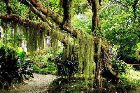 海南三亚当地一日游>呀诺达热带雨林,加35元/人增订宝膳堂自助药膳