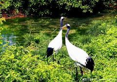 沧州南大港湿地在什么地方?